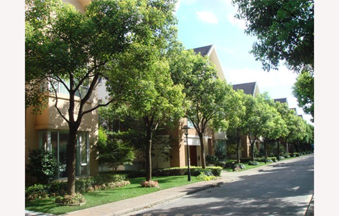 Image of Windsor place villas, Windsor park villas, Hongqiao, Shanghai China, What to do in Shanghai, Haucao, Minhang, Shanghai green spaces, blue sky.,