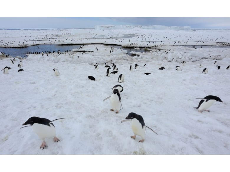 Penguins are suffering because of climate change
