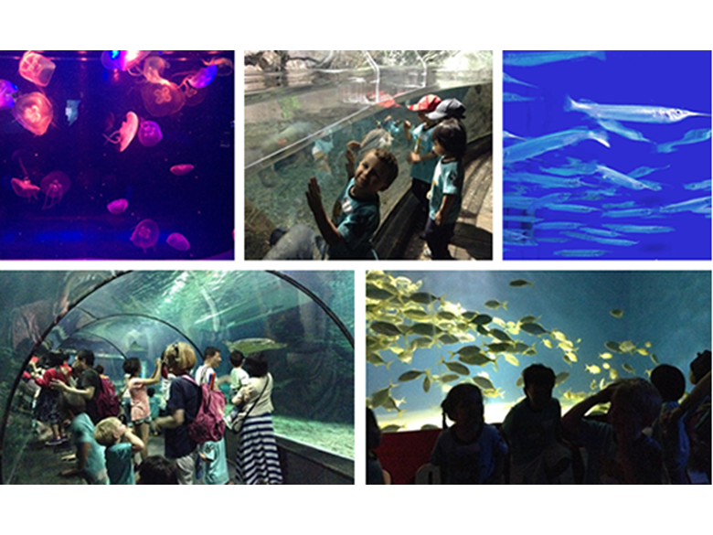 Nursery students at BISS Puxi visit the Changfeng Aquarium