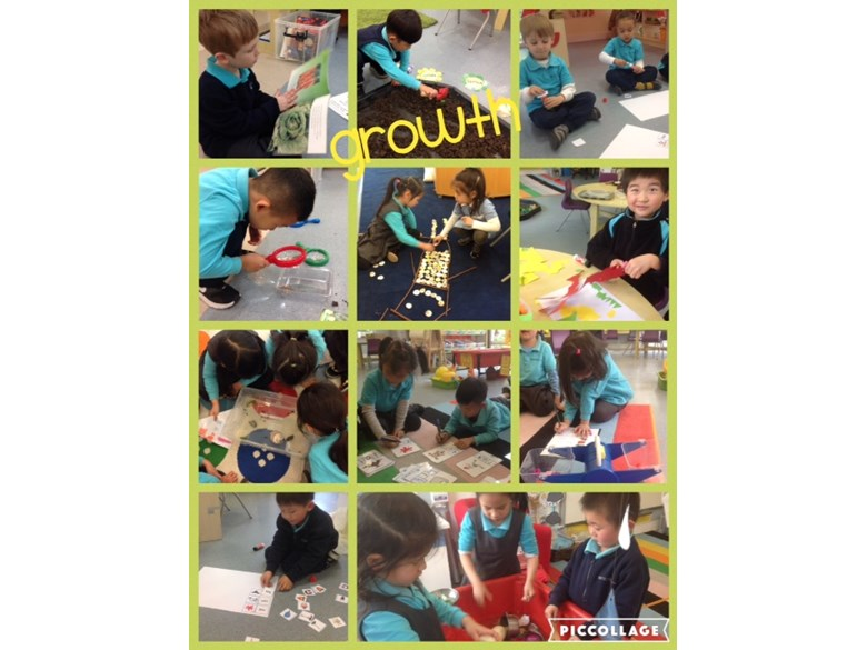 Reception children investigate growth