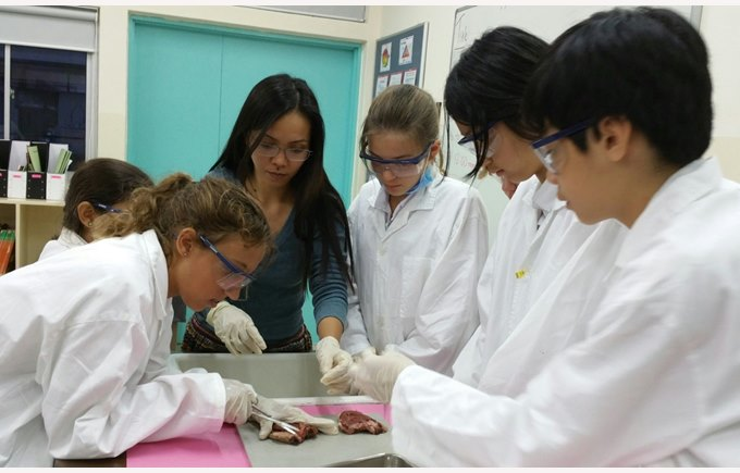 Year 8 dissecting a heart