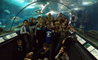 Students from the Shanghai Dutch School at BISS Puxi stay overnight at the Shanghai Aquarium
