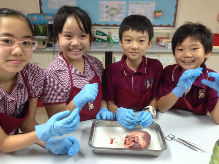 Year 5 dissecting hearts at AP2