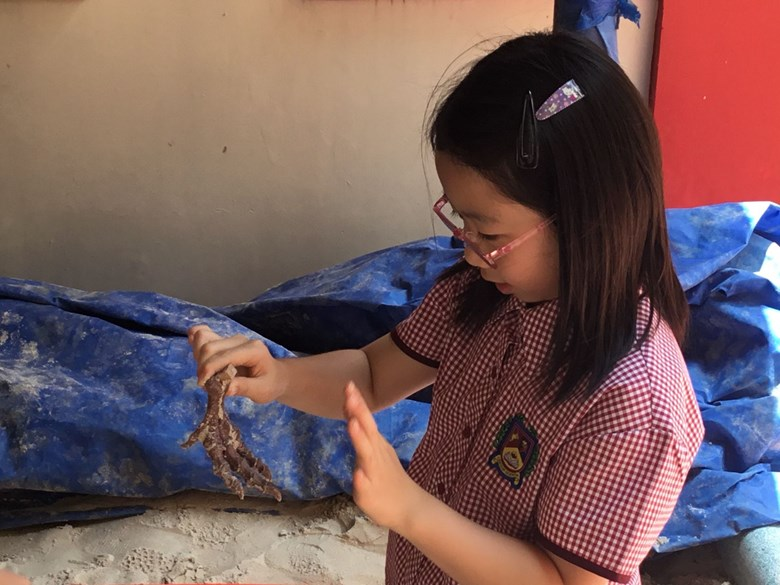 Fossils Found At BISHCMC 3