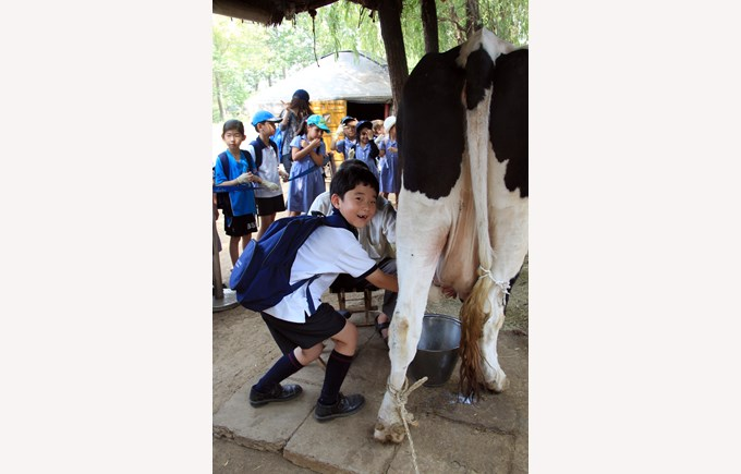 Y2 trip to Green Cow Farm