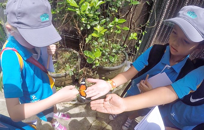 Year 2 Classes Explore The Butterfly and Insect Kingdom