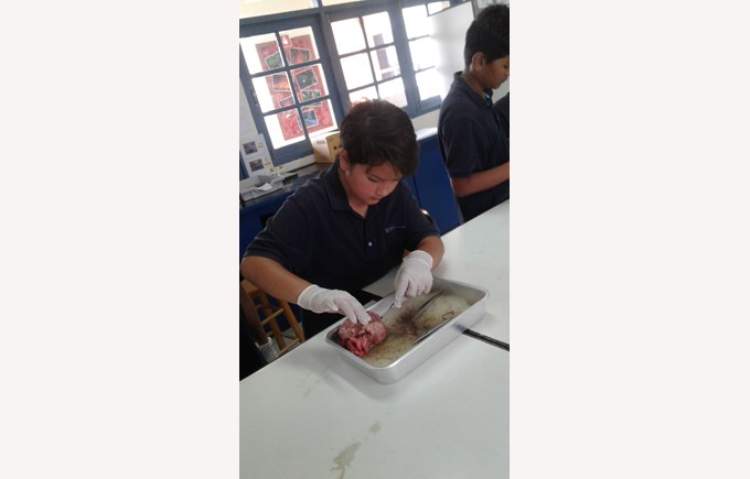 Y6Disect18
