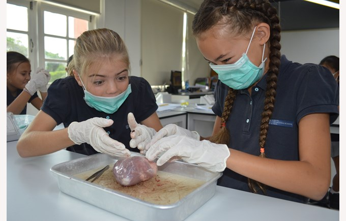 Y6Disect6