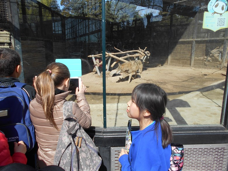 Y4 Trip to Beijing Zoo