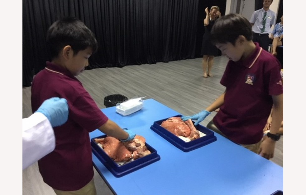 Heart Dissection 6