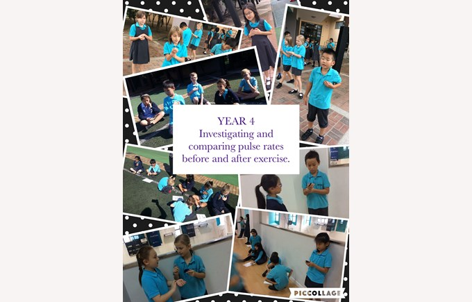 Year 4 investigating pulse rates