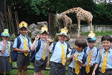 School trip with giraffes