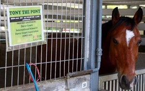 Dover Court International School Singapore RDA DCA Tony the Pony