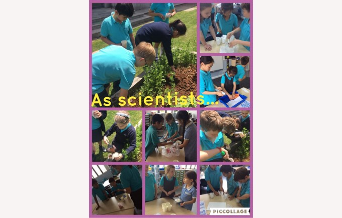 Year 4 as Scientists