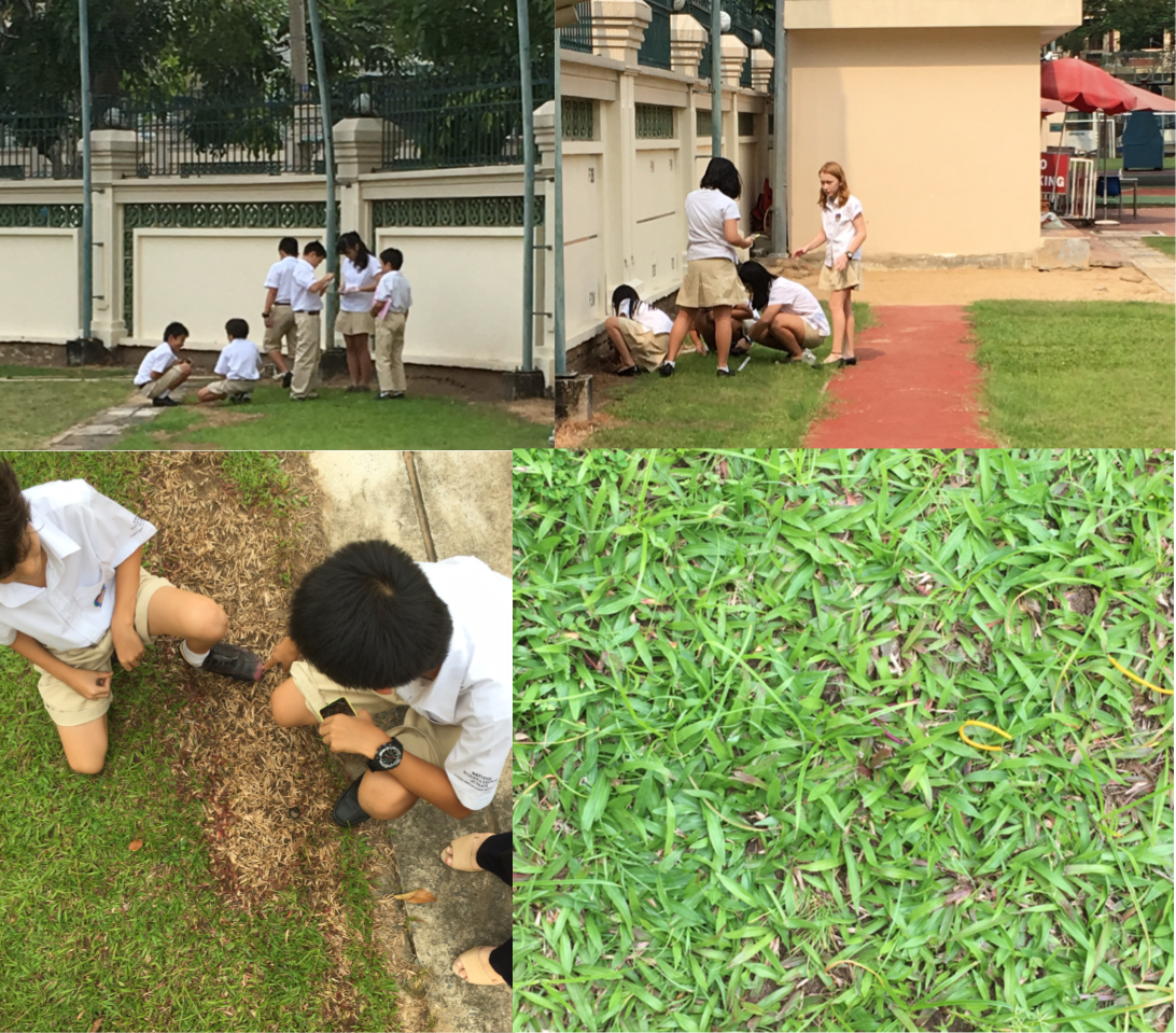 Year 7 Science BIS HCMC