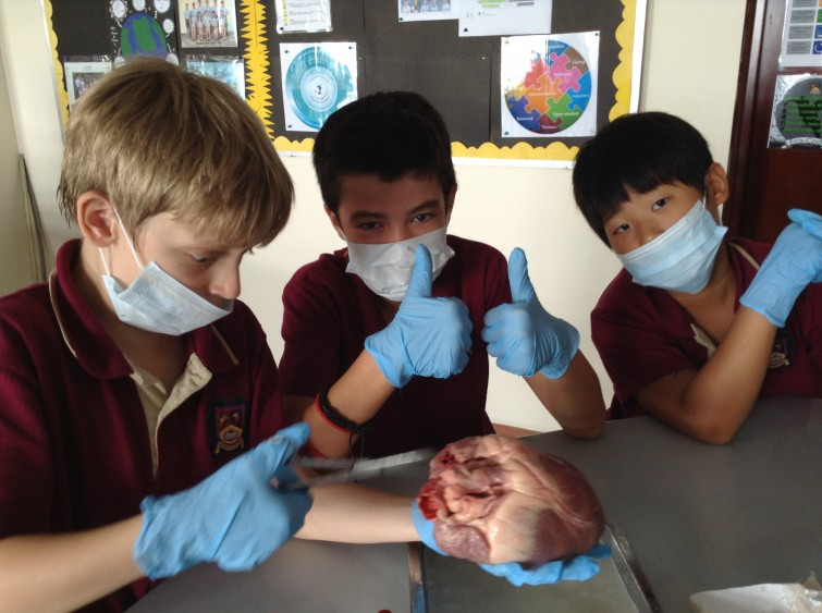 dissection 2
