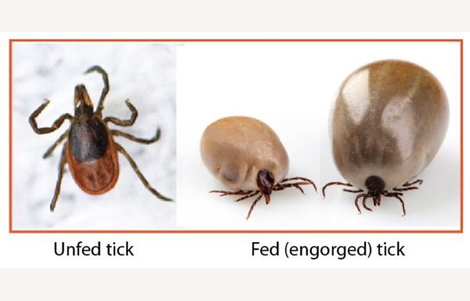 Ticks in Hungary