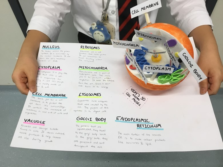 Year 7 Science project - 3D models of animal and plant cells