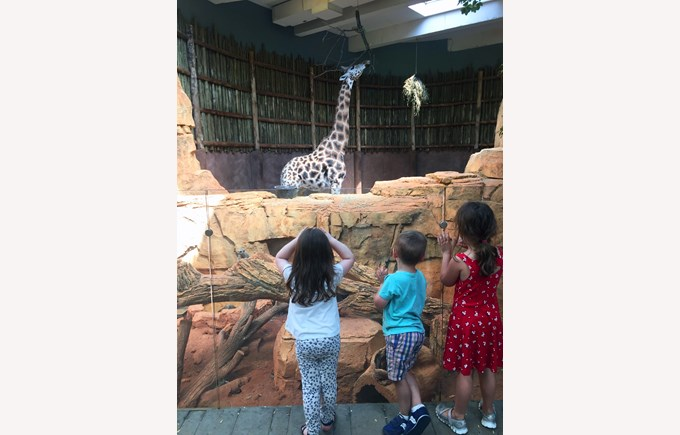 A Field Trip to Lincoln Park Zoo