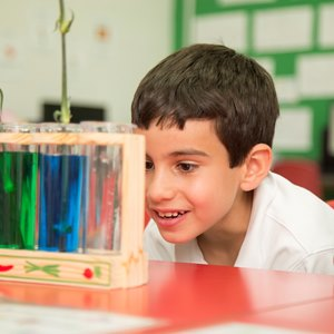 Year 1 science at British International School of Charlotte