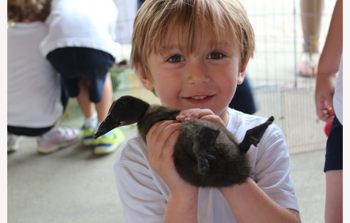 A student holds a duckling